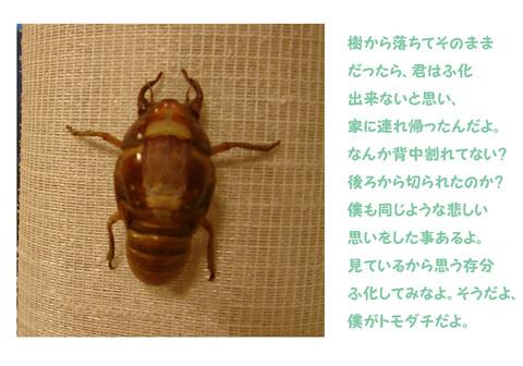 せみ_0.jpg