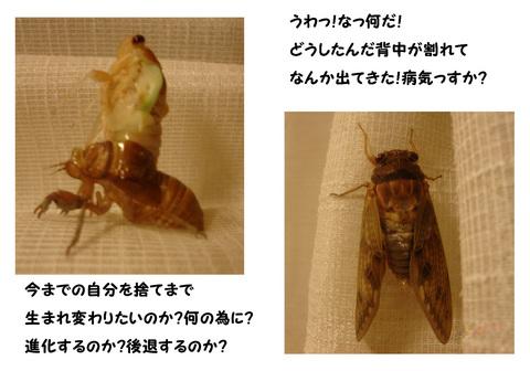 せみ_1.jpg
