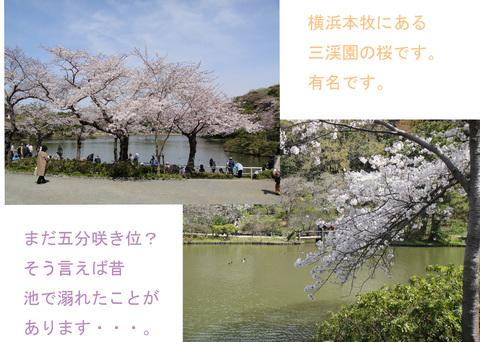 さくら 1_edited-1.jpg