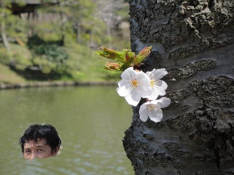 さくら2_edited-1.jpg