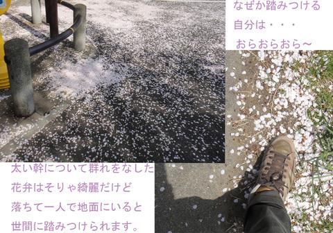 桜11_edited-1.jpg