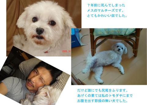 犬1_edited-1.jpg